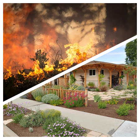 Defend Homes Against Wildfires & Firescape with Salvias