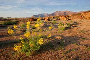 Ask Mr. Sage: How to Water Desert Plants