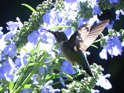 We love our hummingbirds